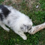 Rose a trouvé un os !
