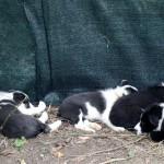 Petite sieste à l'ombre